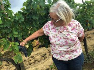 2018-sangiovese-vintage-donatella-cinelli-colombini