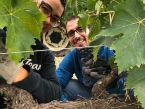 Vendemmia-2020-Montalcino-Casato-Prime-Donne-Violante-e-Enrico