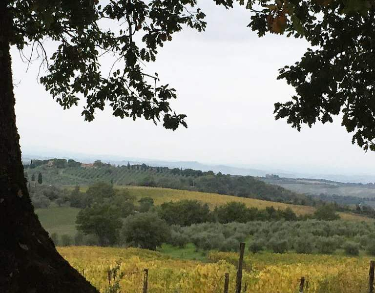 Foliage-Toscana-Fattoria-del-Colle-autunno