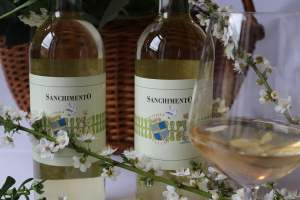 Sanchimento IGT Toscana 2020 - supertuscan from Fattoria del Colle