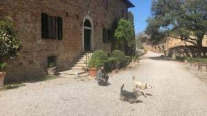 Agriturismo Pet Friendly in Toscana
