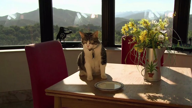 A Talking Cat!?! (2013) - Cinema Cats