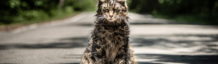 PET SEMATARY (2019) Fails to Capture The Book's Stony Heart