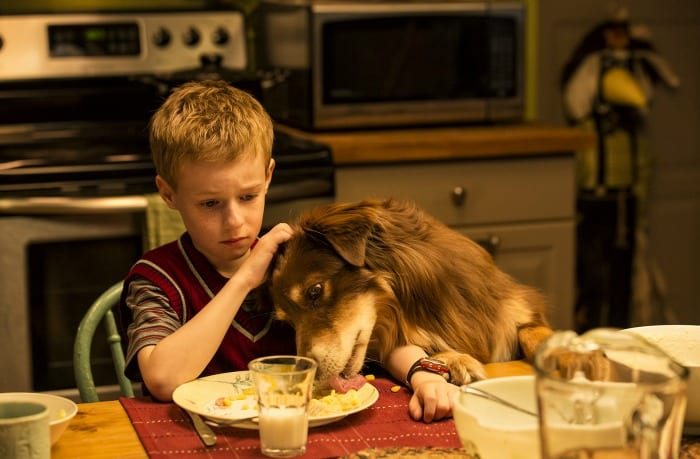 """""""The Selected Works of T.S.Spivet""""   Day 42 """"The young and Prodigious Spivet"""" Photo: Jan Thijs 2012"""