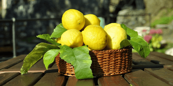 Panier de Citrons Cinque Terre