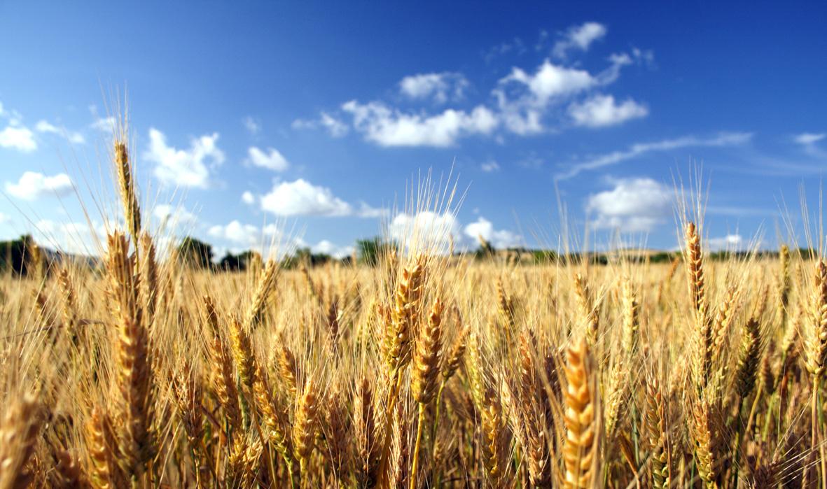 La lista completa dei cereali e le loro proprietà