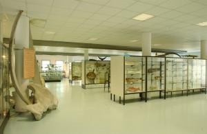 San Benedetto del Tronto, Museo del Mare, museo ittico