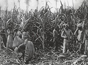 Schiavi in una piantagione
