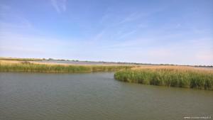 Parco del Delta del Po, canneti lagunari