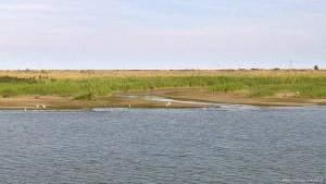 Parco del Delta del Po, paesaggio busa