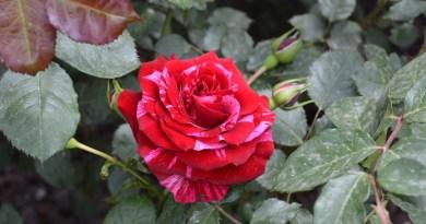 10 fiori più belli