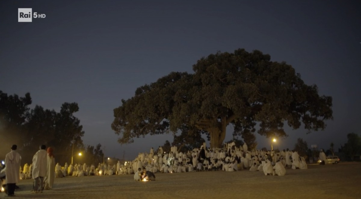 Alla scoperta di due alberi sacri