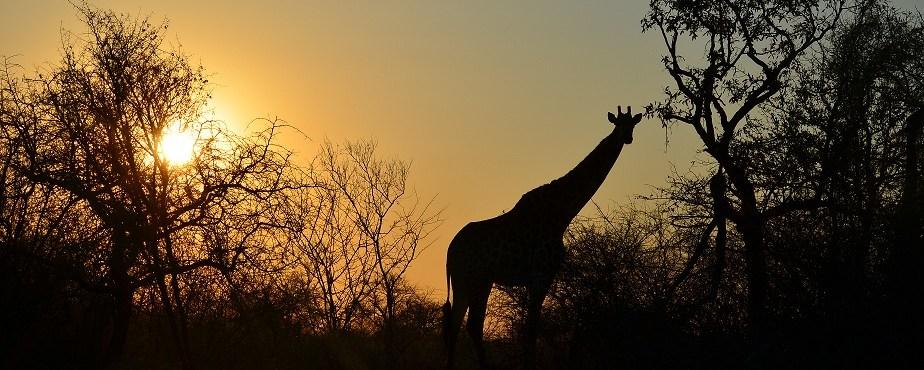 Sudafrica 2011