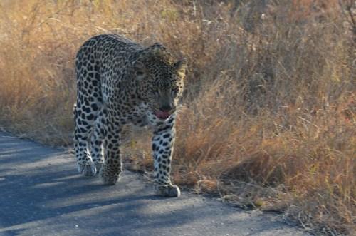 sud africa 2011 190