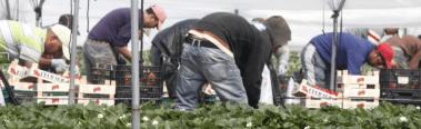Trabajadores campesinos