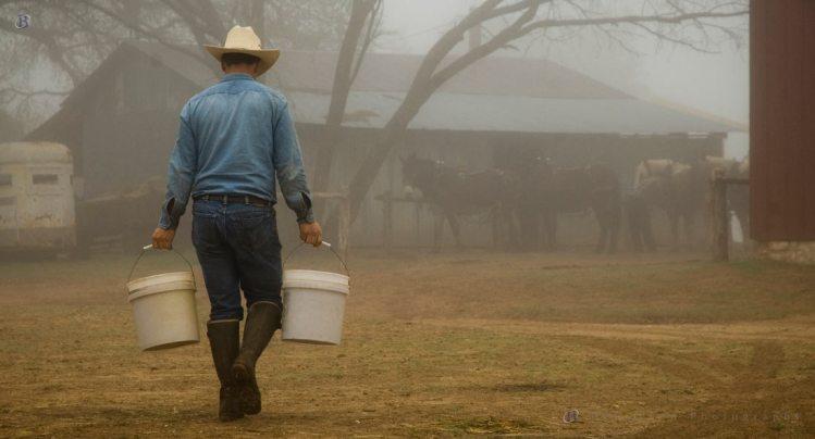 Feeding in the Fog
