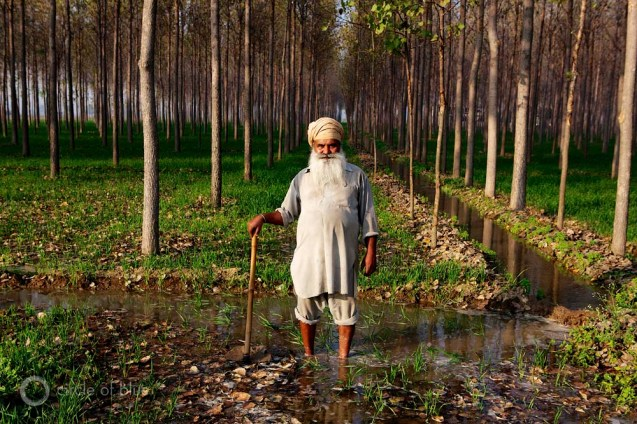 India Punjab Nawanshar Desraj Khai Sekhon family farm farming farmer Green Revolution winter wheat rice paddies aspen poplar crop cropland harvest electricity electric groundwater well pump flood irrigation water food energy choke point circle of blue wilson center j. carl ganter
