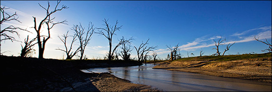The skeletons of Australia's iconic Red Gum trees haunt the shrinking shores of Lake Pamamaroo near Menindee, New South Wales.