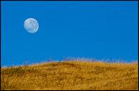 moonfield