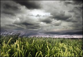 storm_field