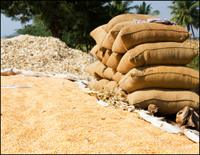 India Drought Affects Imports