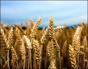 Agri-colonialism?