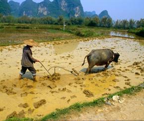 China-Climate-Change-290