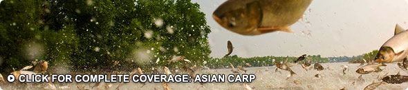 Asian Carp Coverage & Videos