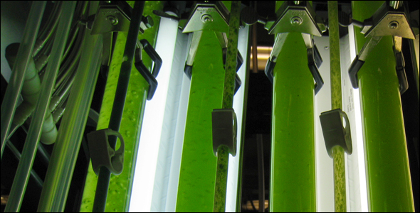 Biofuels University of Michigan algae fermentation photobioreactor algae-based water treatment bio-energy