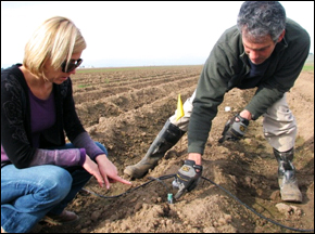 Lettuce growers in Monterey County
