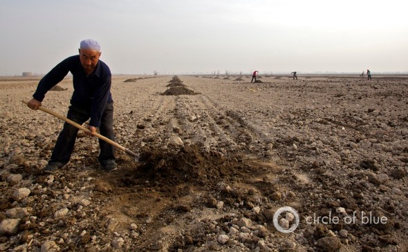 China Water Energy Agriculture Food Organic Vegetable Drought Ningxia