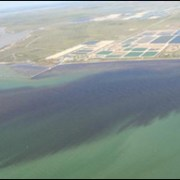 Red Tide Dead Fish Algae Blooms