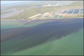 Red Tide Dead Fish Algae Blooms