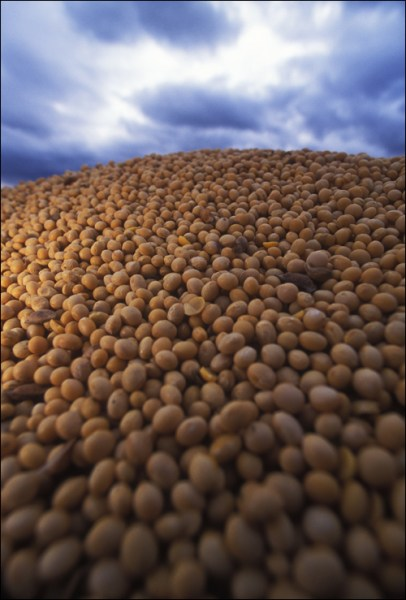 hese organic soybeans, by happenstance, were grown in the US and are being prepared to ship to China.