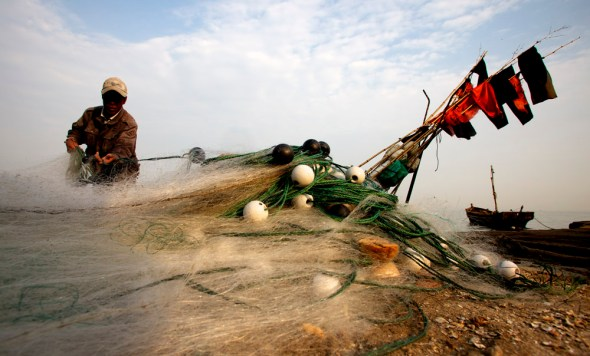 china aquaculture fishing shellfish qingdao shandong scallops clams oysters mussels kelp