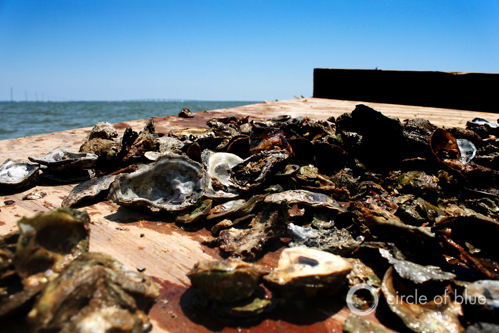 Florida Oyster Harvest Suffers As Drought Intensifies Water Battle with Georgia and Alabama