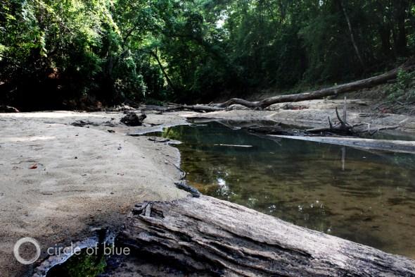 Swift Slough Wewahitchk Florida Sloughs Apalachicola River naturally flood plains habitat endangered mussels tupelo cypress swamps nutrients marine ecoystem Apalachicola Bay