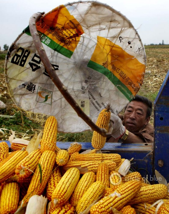 Inner Mongolia China Chinese farmers harvest corn Tongliao