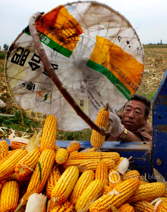 Inner Mongolia China Chinese farmers harvest corn Tongliao