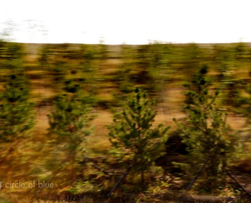 """The """"green wall of China,"""" a barrier of trees planted to try to stop drifting sands on the Inner Mongolia grasslands"""
