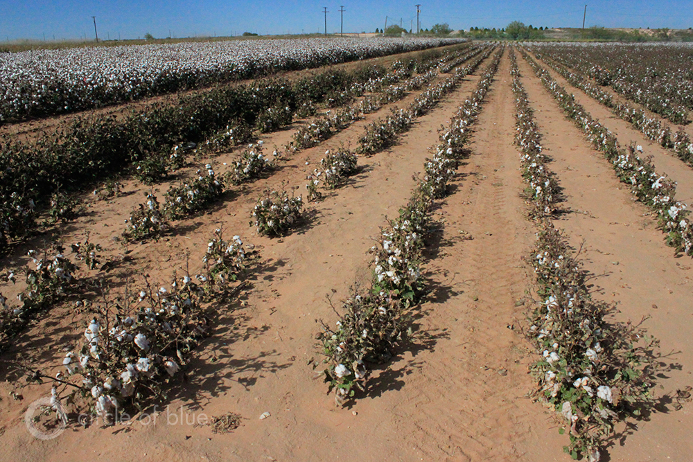 Texas High Plains Prepare for Agriculture Without Irrigation