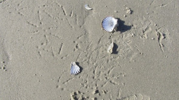 Cape Cod beach shells clean air American character East Coast Atlantic Ocean