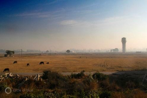 India Chandigarh Haryana Punjab Green Revolution farm farmer farming rice wheat grain native agriculture productivity yield water food energy choke point circle of blue wilson center aubrey ann parker