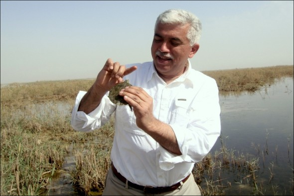 Nature Iraq Azzam Alwash central marsh wetland bird Mesopotamia turtle fish rare bird watch migrate migrations basrah reed warbler babbler tigris euphrates river