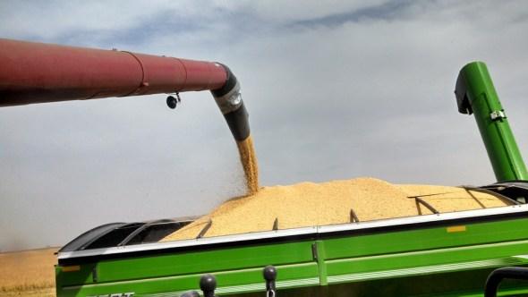 Kansas soybean harvest Ogallala Aquifer irrigation agriculture Thomas County farm farmer farming great plains prairie food Stuart Beckman Sheridan County