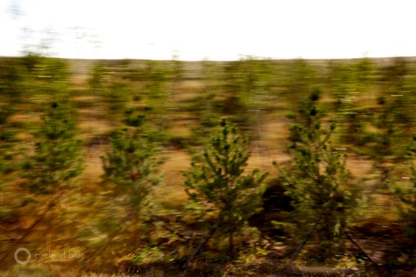 Trees planted along highways in Inner Mongolia struggle against the advancing desert.