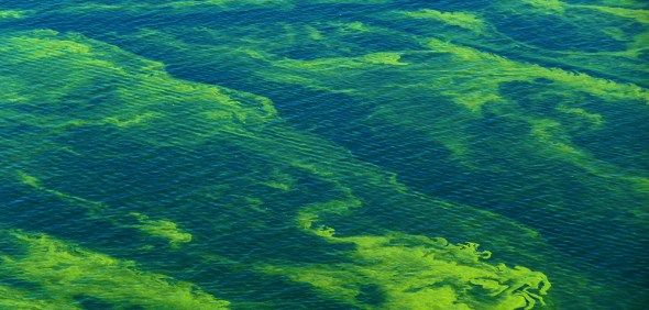 toxic algae bloom Lake Erie Great Lakes Ohio water pollution phosphorous