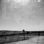 Seaguls from the coast fly far inland and into the dry landscape of California's Central Valley.