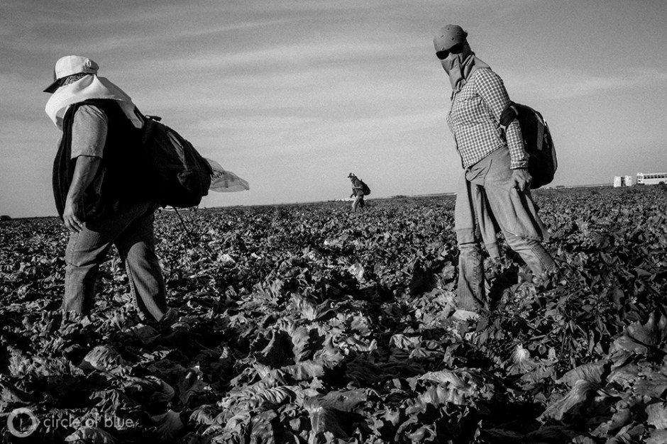Lettuce pickers in Dan Errotabere's field near Coalinga break for the day. With reduced water deliveries resulting from a statewide drought, Errotabere, like other Westlands farmers, has been forced to heavily tap groundwater to keep his crops growing.