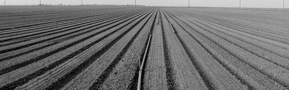 California drought drip irrigation efficiency agriculture water consumption
